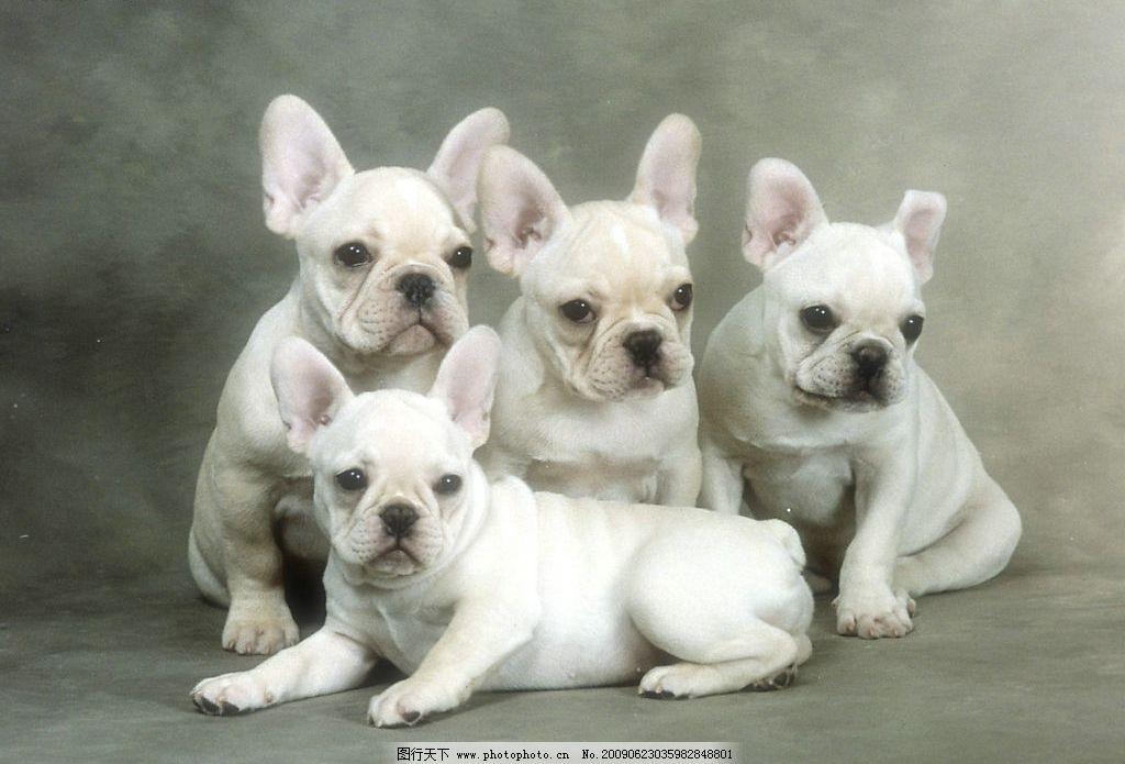 狗宝宝 动物世界 宠物 可爱 小狗 犬 摄影图库