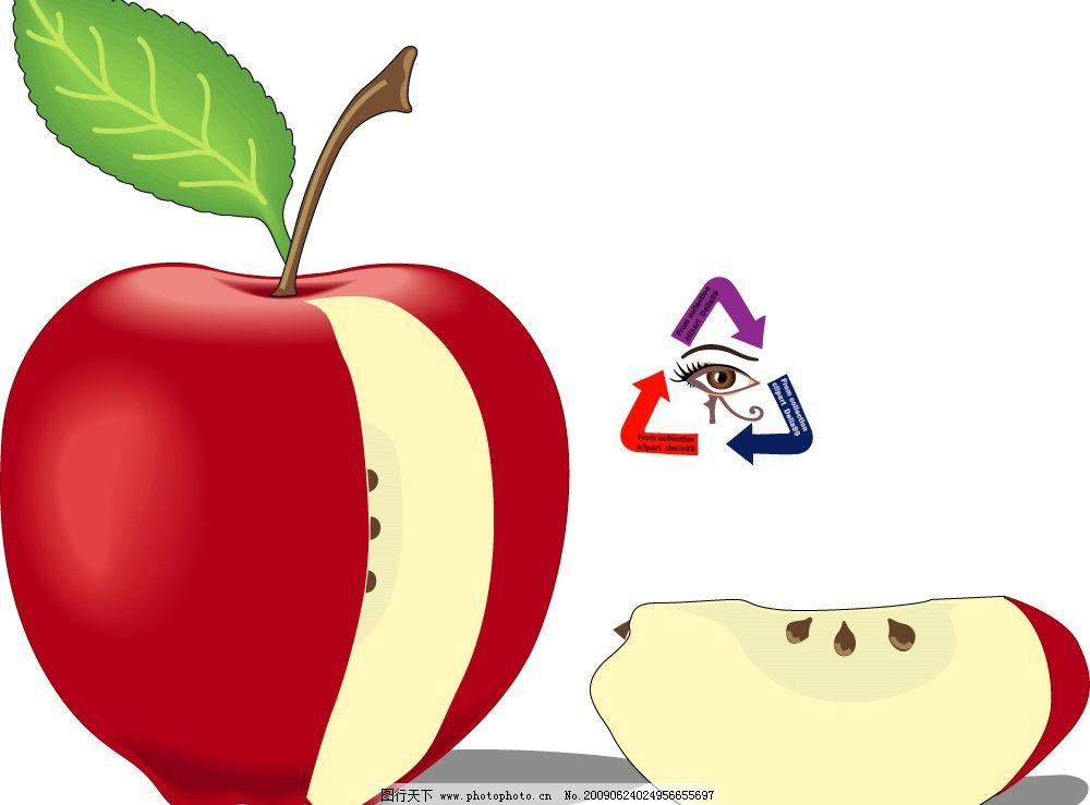 红苹果 水果 苹果 青苹果 水晶苹果 矢量苹果 水果店素材 果产 农产品