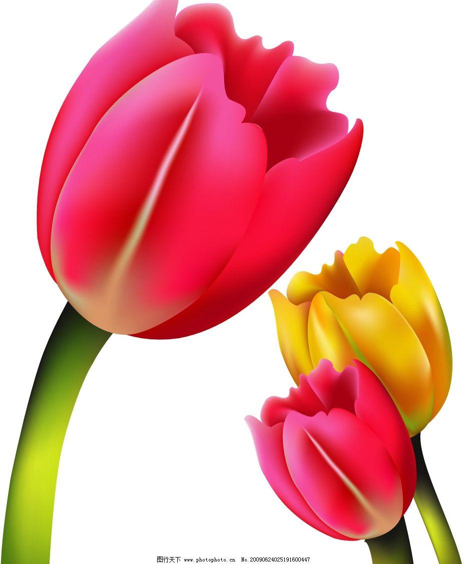 郁金香 红花 花朵 三朵花 黄花 广告设计 移门图案 矢量图库 ai 生物