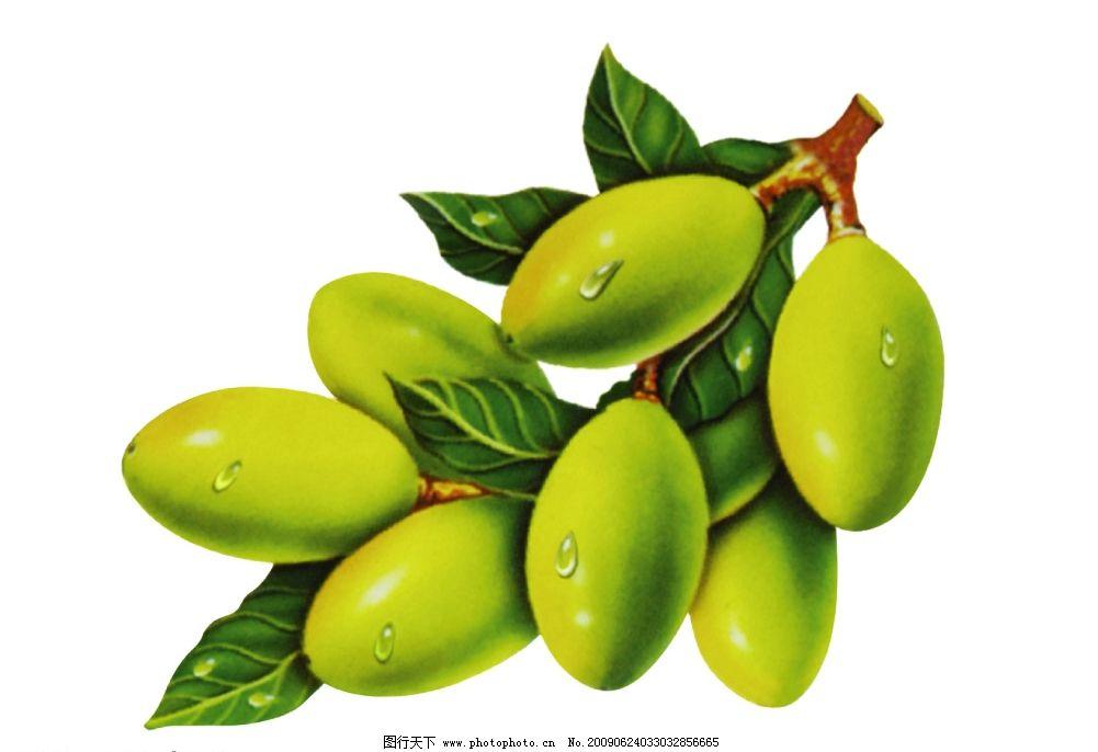 橄榄 橄榄油 水果 美容水果 psd分层素材 源文件库 300dpi psd