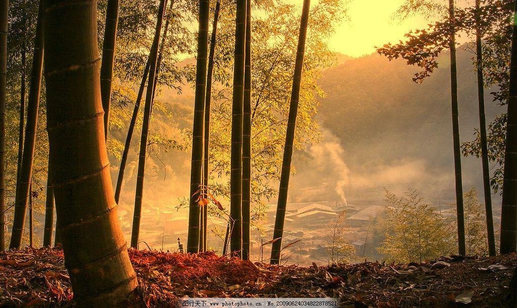 竹乡晨晖 橙色 竹子 乡村 村子 风景 风光 背景 晨光 自然景观