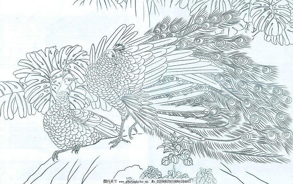 孔雀 中国工笔画 孔雀线图 石头 文化艺术 绘画书法 设计图库 72dpi