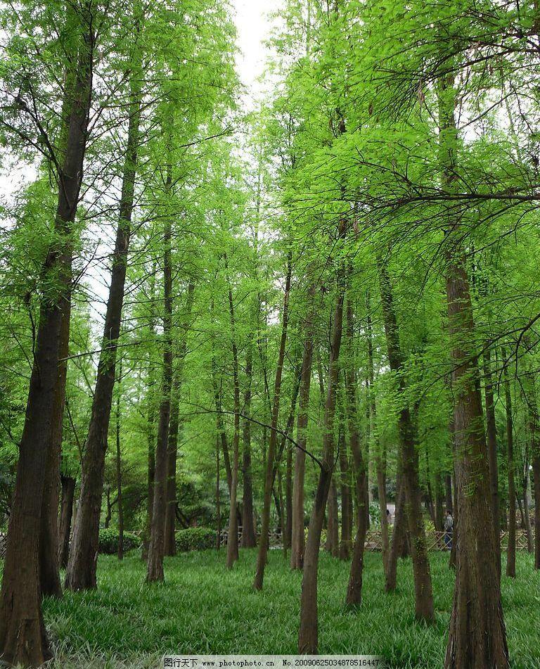 草地 生命 生态 环保 空气 清新 树林 树木 森林 自然景观 自然风景