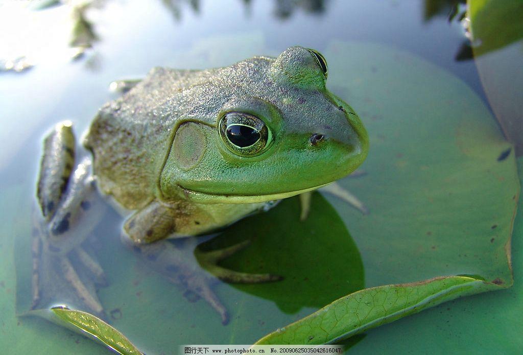 设计图库 生物世界 野生动物    上传: 2009-6-25 大小: 1.