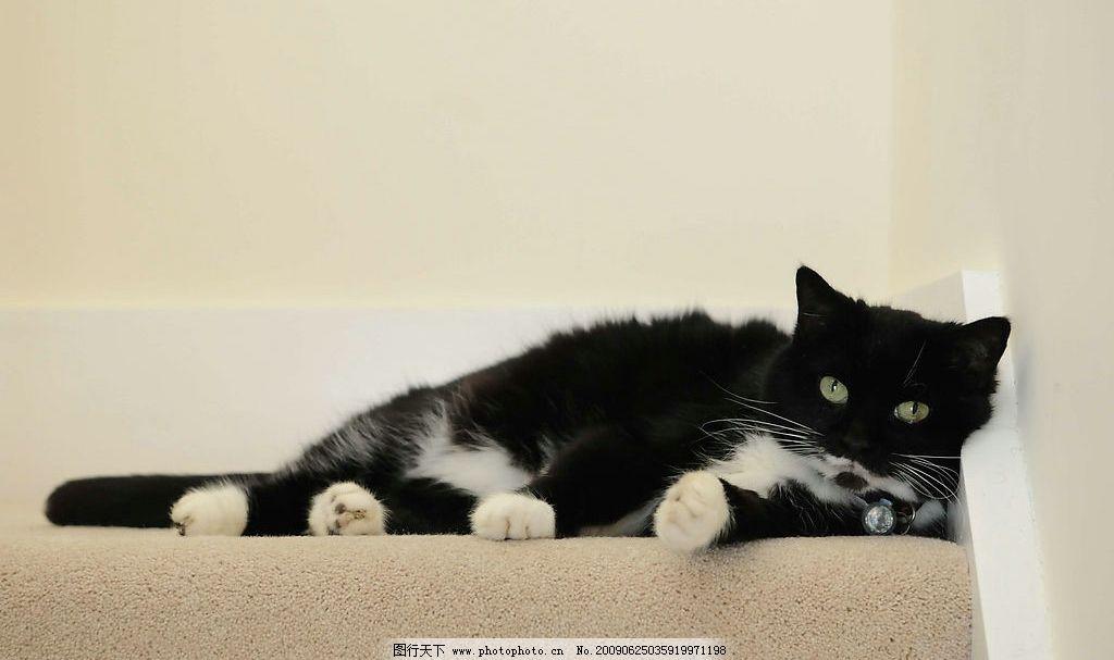 可爱 黑白相间的猫