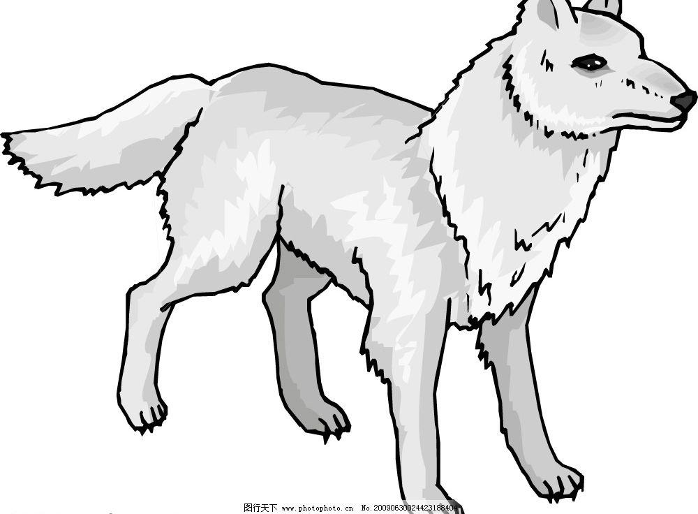 老狼 生物世界 野生动物 矢量图库 cdr